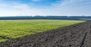 Ukrainian landscape with winter crops Stock Photos