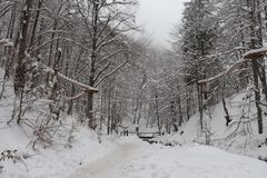 Path along the winter snow forest stock photos