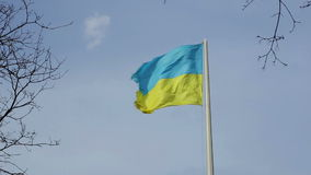 Ukrainian national flag against the blue sky. Between branches stock video