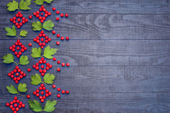 Ukrainian pattern of Viburnum Stock Photography