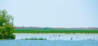 Ukrainian river landscape. The landscape near river Danube with pelicans Stock Image