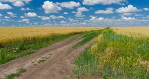 Ukrainian rural landscape with agricultural fields Royalty Free Stock Photos