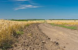 Ukrainian rural landscape with corn fields Stock Images