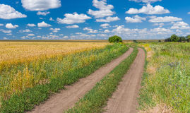 Ukrainian rural landscape with wheat field and dirty road Royalty Free Stock Image