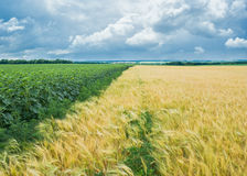 Ukrainian rural pre-storm landscape Stock Photography