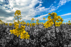 Spring. This is the colors of Ukrainian spring 2014 rising from the dust royalty free stock images