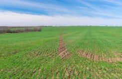 Ukrainian spring landscape with crops Stock Image