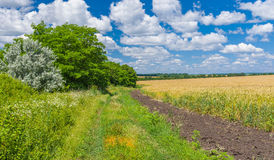 Ukrainian summer landscape with country road Stock Images