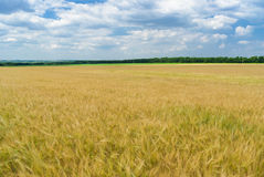 Ukrainian summer landscape Stock Photos