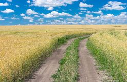 Ukrainian summer landscape Royalty Free Stock Photo