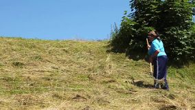 Ukrainian toiler. UKRAINE, CARPATHIANS, JULY 15, 2009: Woman with rake works on flank of hill in Carpathian mountains, Ukraine, July 15, 2009 stock video