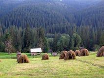 Ukrainian village. Carpathian forest meadow hay grass summer tress rick mow evening silence Royalty Free Stock Photo
