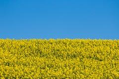 Ukrainische Flagge Stockfotos
