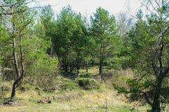 Ukrainischer Wald Stockfotos