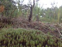 Ukrainischer Wald Stockbild