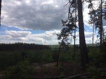 Ukrainischer Wald und Himmel Lizenzfreies Stockbild