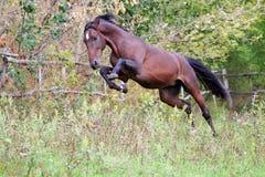 Ukrainska hästavelhästar Royaltyfri Bild