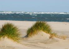 Ukrywa plażowego Caleri blisko Rosolina kobyli Rovigo Włochy Obrazy Royalty Free