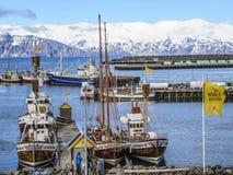 Ukrywa z łodziami dla wielorybiego dopatrywania w Skjalfandi fjord zdjęcia stock