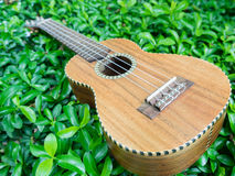 Ukulele on the bush. Stock Image