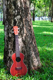 Ukulele in garden royalty free stock photography