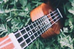 Ukulele gitara przy halną natura lasu trawą Fotografia przedstawia Fotografia Royalty Free