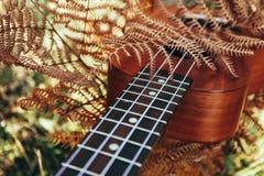 Ukulele gitara przy halnej natury jesieni suchą żółtą trawą P Fotografia Stock
