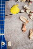 Ukulele and shells on  floor. Royalty Free Stock Photo
