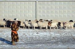 Ulaanbaatar, Mongolei - Dezember, 03 2015: Mongolischer Mann im Nationalkostüm und in einer Schafherde an einem Zaun im Winter Stockbilder