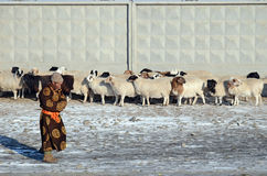 Ulaanbaatar Mongoliet - December, 03 2015: Mongolisk man i nationell klänning och en flock av får på ett staket i vinter Arkivbilder