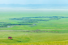 Ulagai steppe and Crooked River Stock Image