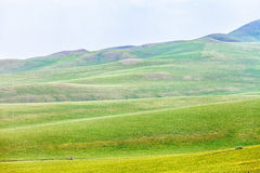 Ulagai Steppe Region. Ulagai steppe is the shooting of the film Wolf Totem in Inner Mongolia Royalty Free Stock Images