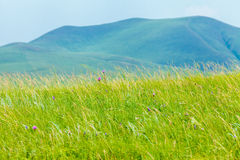Ulagai Steppe Region Stock Photography