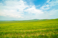 Ulagai steppe Royalty Free Stock Images