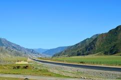 Ulagan tract. Mountain road 2018 royalty free stock image