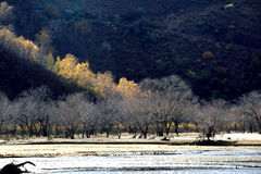 Ulan Buh grassland in autumn Stock Photography