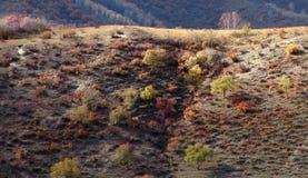 Ulan Buh grassland in autumn Stock Images