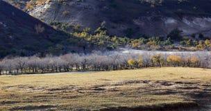 Ulan Buh grassland in autumn Stock Photos