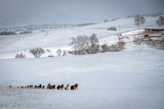 Ulan Buh grasslands in winter Stock Photo