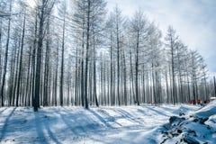 Ulan Buh grasslands in winter Royalty Free Stock Images