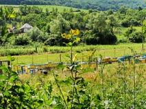 Ule w ogrodowej klauzurze zdjęcie royalty free