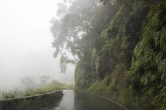 Ulewa deszcz na Wąskiej drodze podczas Tropikalnej burzy w Maui Hawai zdjęcia royalty free