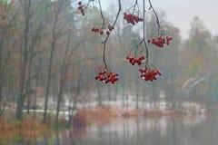 Ulewa na tle jesień las zdjęcie stock