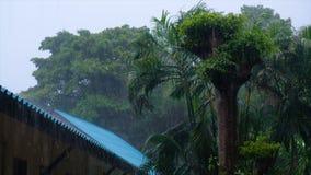 Ulewny deszcz i gwałtowny wiatr na drzewkach palmowych podczas klasycznej tropikalnej burzy w monsunie przyprawiamy Zmiany klimat zbiory