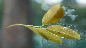 Ulewny deszcz na okno ekranie zbiory wideo