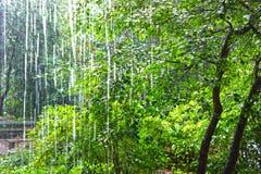Ulewny deszcz przeciw drzewom fotografia stock