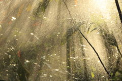Ulewny deszcz przeciw słońcu. Zdjęcia Royalty Free