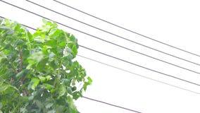 Ulewny Deszcz, silny wiatr Trząść gałąź drzewa zbiory