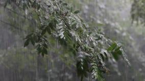 Ulewny deszcz spada na gałąź zbiory wideo
