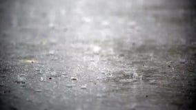 Ulewny deszcz w jesieni HD 1280x720 zbiory